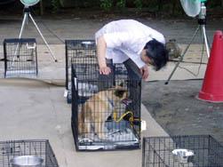 預かった動物の様子を見る獣医師