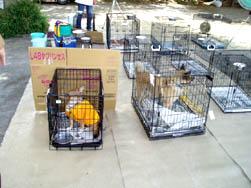動物救護所の様子